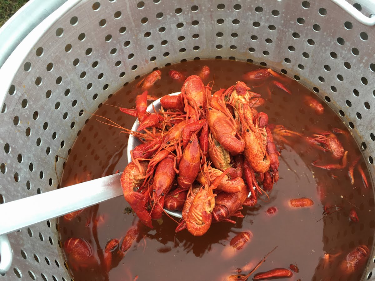 How To Steam Crawfish 1015387 By Smokyribs Crawfish Recipes And Cooking  Tips Ifood How To Cook