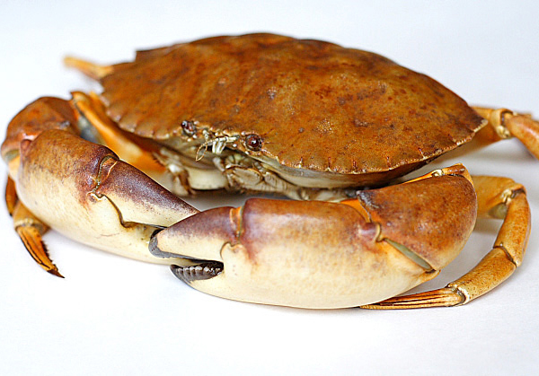 Boiled Crab picture