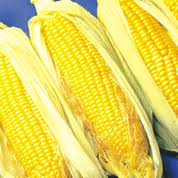 Corn — Corn On The Cob