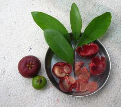 Herbs for hernia