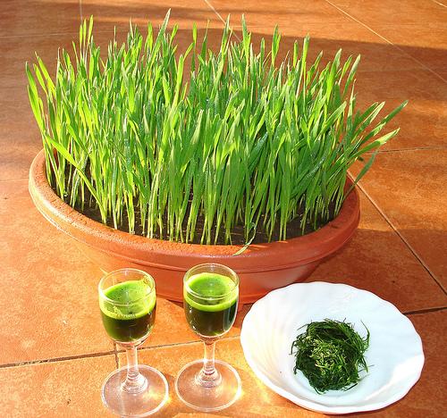 Wheatgrass, Spirulina, and Chlorella