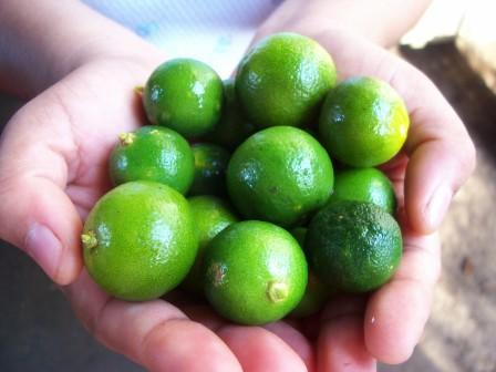 Calamansi Juice Concentrate Health Benefits