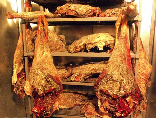 Bear Meat