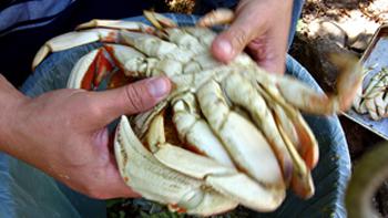 Storing Crab