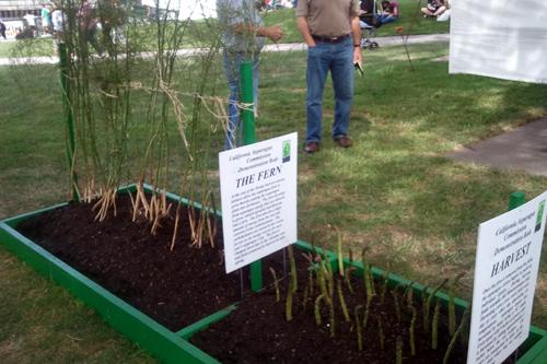 Learning how Asparagus grows