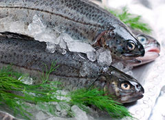 preserve fish
