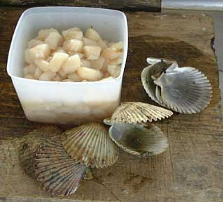 Cleaned scallops
