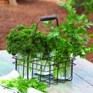Storing Parsley
