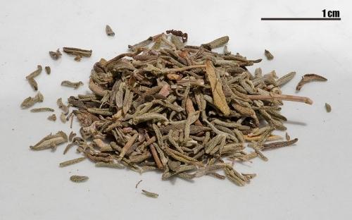 Dry Thyme