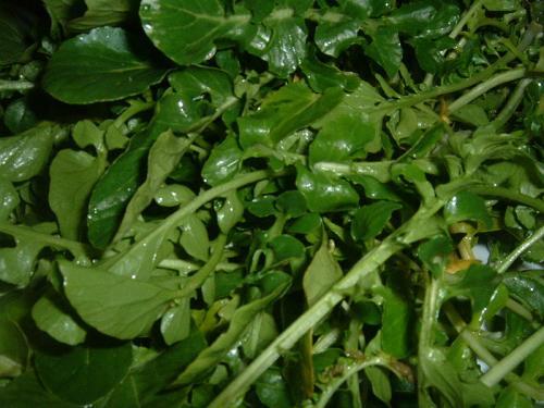 Watercress Leaves