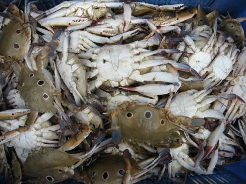 Keep crabs fresh