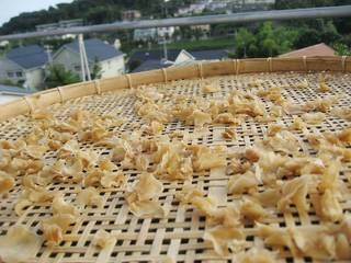 Drying ginger in sun.
