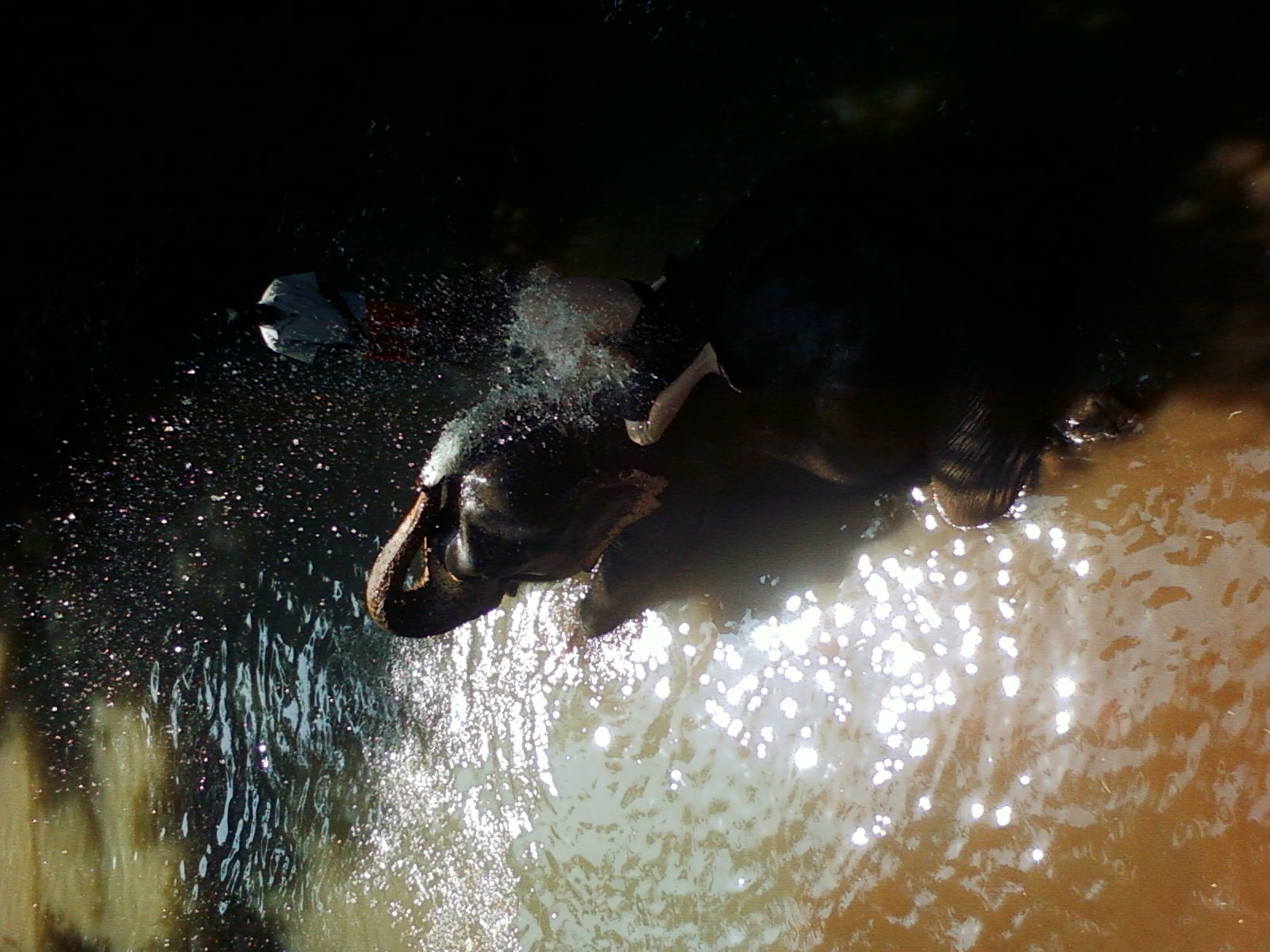 Goan style of bathing 1
