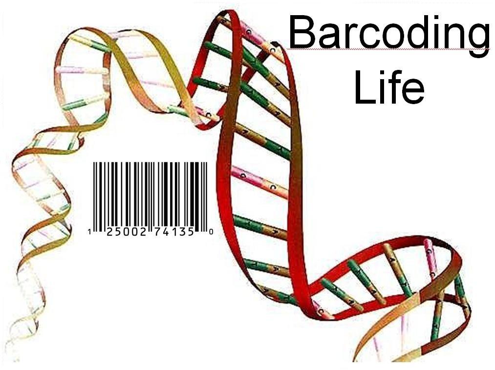 Bar Code Of Life