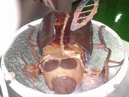 Cockroach Cake