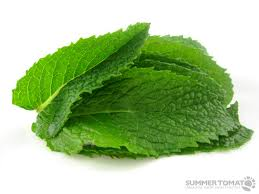 Mint Medicinal Uses -- Fresh Mint Leaves