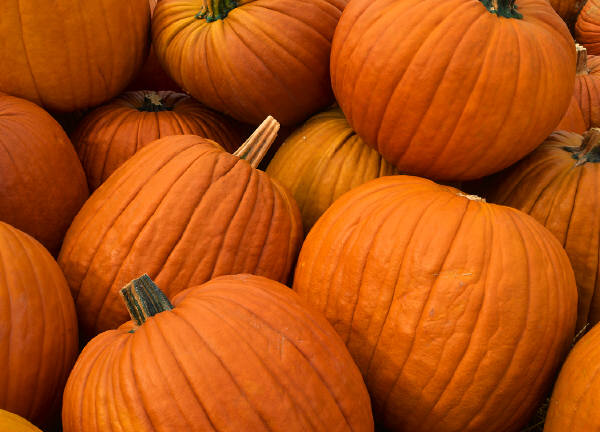 Directions For Freezing Baked Pumpkins
