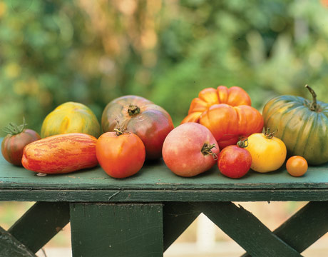 Choosing the right kind of Tomato variety