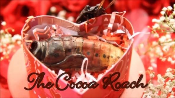Cocoa-Roach