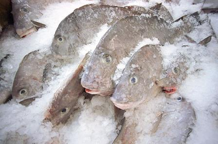 3 techniques of storing fresh fish are Icing, Refrigeration and Freezing