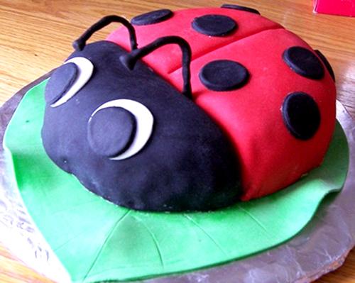 brownie bug