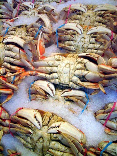 Fresh crabs