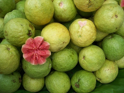 Health Benefits Of Guava Juice Concentrate