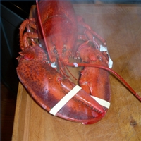 cooking-frozen-lobster