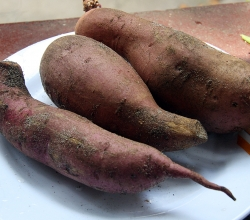 Yams: sweet and delicious