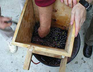 Stomping the grapes by feet