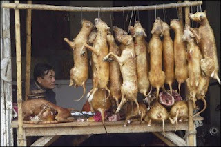 Dog meat 2