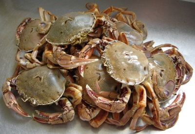 Fresh crabs for steaming