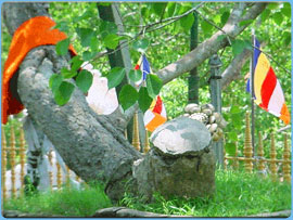srimahabodiya-anuradapuraya