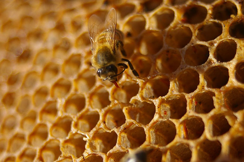 Raw honey comes directly from the beehive and is not at all processed.