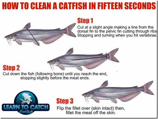 fillet catfish