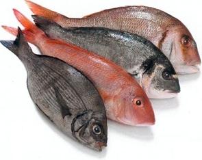 Freezing Mashed Fish
