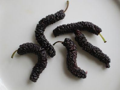 Pakistan Mulberries