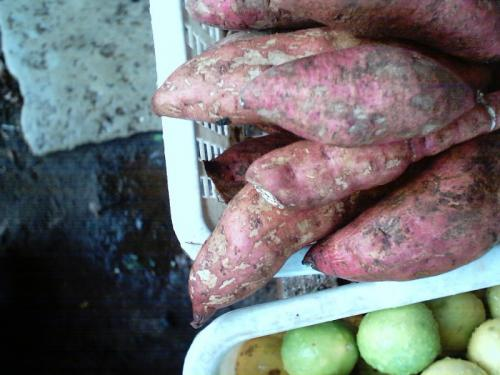 Sweet potatoes are rich in vitamins
