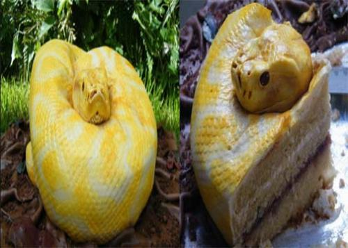 how to make a snake cake easy