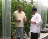 About How To Grow Tomatoes Indoors