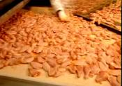 Processing Of Chicken In Factory