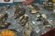 Varieties Of Oyster At A New York Food Show