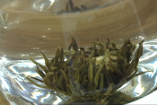About Numi Tea At The Fancy Food Show
