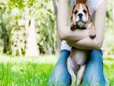 Adopting A Dog From A Shelter: Puppy Rescue Myths And Facts