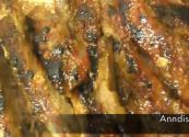 Garlic Onion Brown Sugar Rub Marinated Baked Ribs