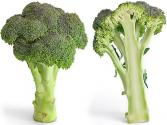 Nutritional Benefits of Broccoli and Alfalfa Sprouts