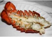 Broiled Live Lobsters