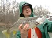 How To Do Cumberland Trout Fishing