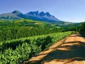 Take A Virtual Trip To Doolhof Wine Estate