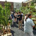Have Your Pick At An 'urban Orchard'